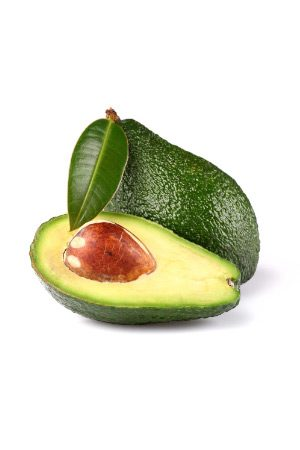 Pianta di Avocado Ettinger