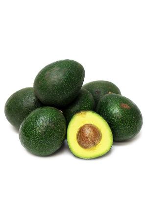 Pianta di Avocado Reed