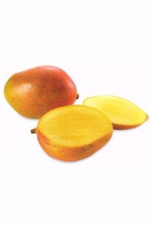 Pianta di Mango Heidi