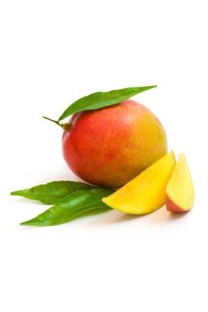 Pianta di Mango Keitt