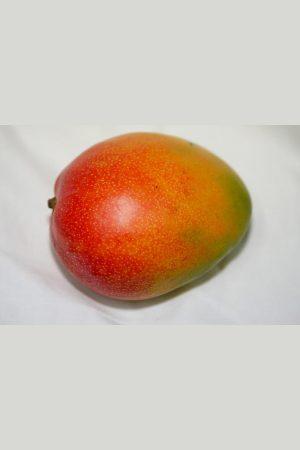 Pianta di Mango Kent