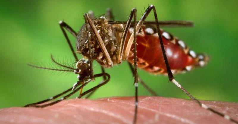 Come combattere le zanzare con rimedi naturali