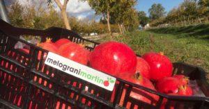 Vendita Melagrane Wonderful One Premium 20 kg - Spedizione gratuita
